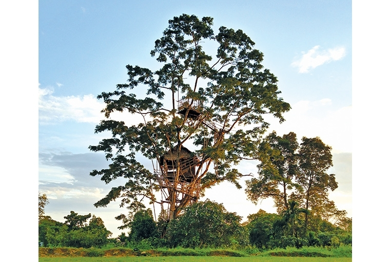 A Walk In The Clouds : Meghalaya The Bangladesh viewing point is tucked pretty atop a tree